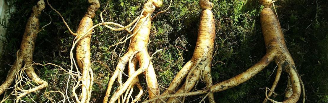 gyógynövények potencia erekció