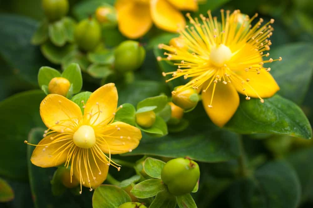 Potencianövelés, vágyfokozás a növények erejével!