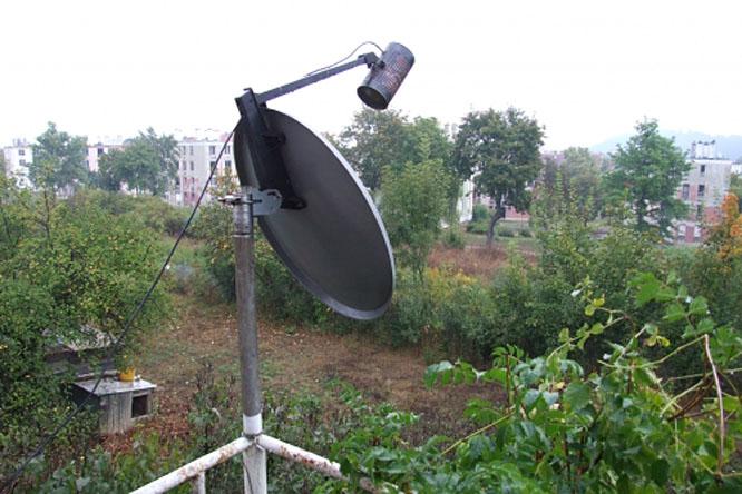 antennák pénisz