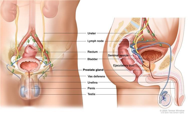 orchiectomia és erekció