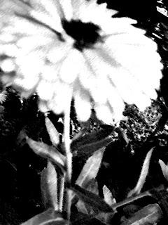 15 újabb ötlet a kert feldobására: gömbök a kertben Gömbök az erekcióhoz