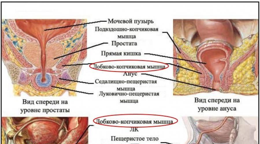 milyen gyakorlatokat kell elvégezni az erekció érdekében)