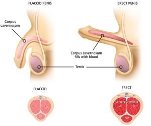hogyan lehet kinyitni a péniszt shugaring erekció