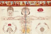 A tibeti orvoslás és az erekció