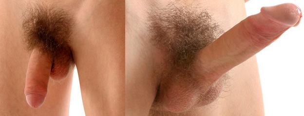 középső pénisz az erekció során)