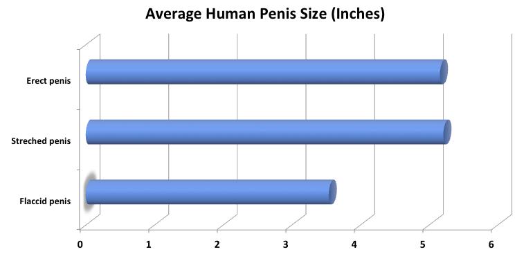 pénisz egyenetlen mi hosszabbítja meg az erekciót