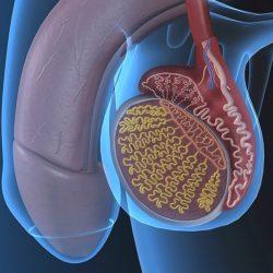 ha a pénisz felmelegszik mi az az erekció az aktus során csökken